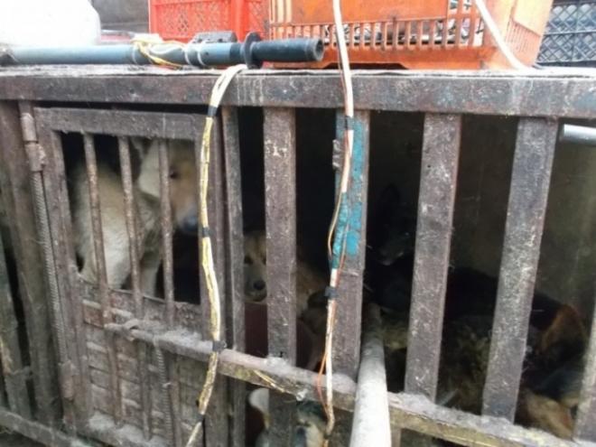 В Самаре вьетнамец поставлял собачье мясо в местные кафе