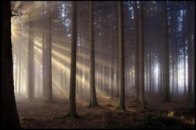 Самарские леса закроют до конца лета