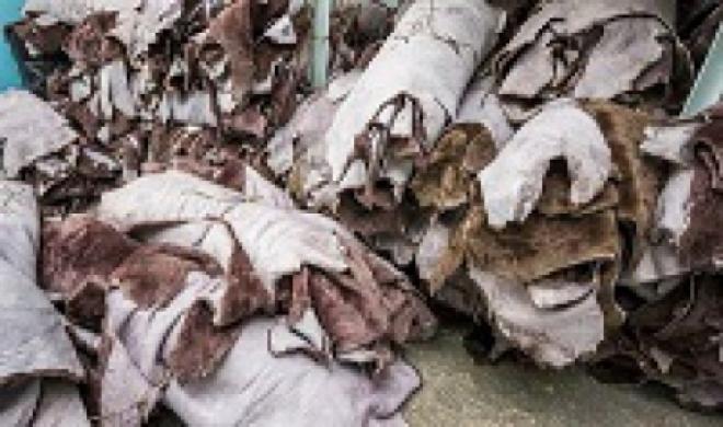 В Самарской области уничтожили 700 кг шкуры