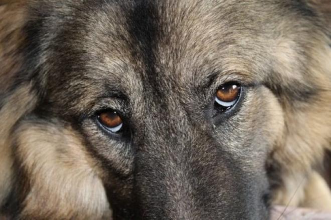 В Самаре выбран новый подрядчик для отлова бродячих кошек и собак