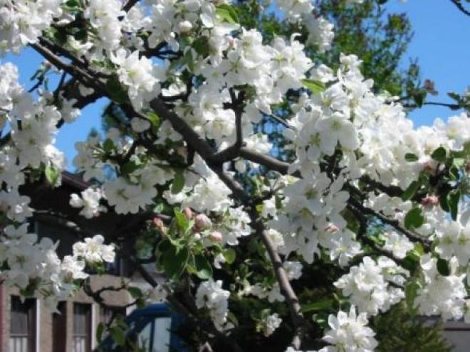 Яблони и вишни украсят дворовые территории Самары, а пальмы - набережную