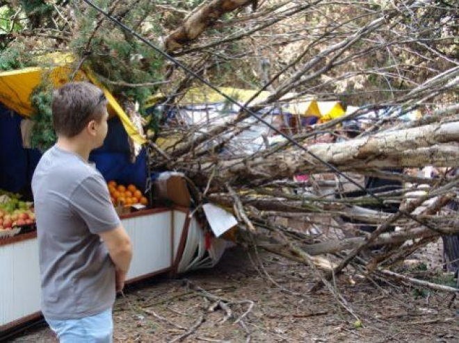 """В Самаре вырубят 3 тысячи старых и """"опасных"""" деревьев"""