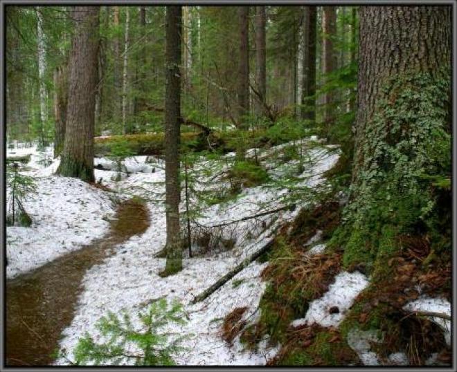 Самарские леса застроят