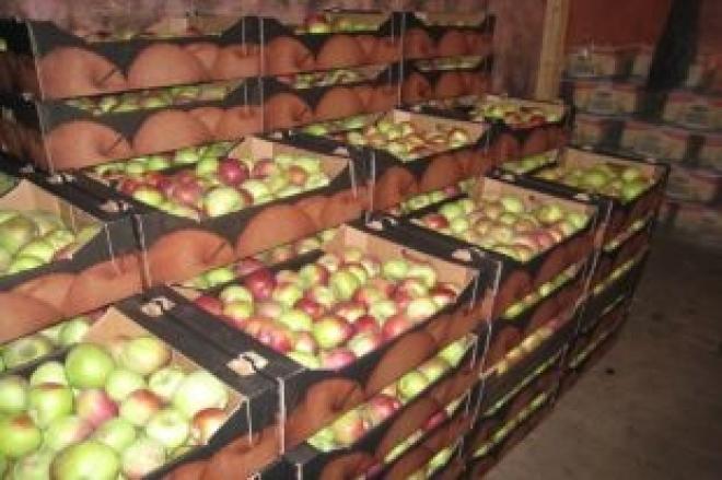 Россельхознадзор Самары уничтожил 455 килограммов польских яблок