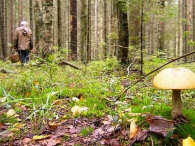 В Тольятти заблудившегося грибника нашли мертвым