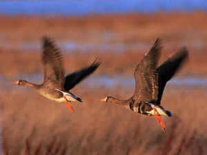 Самарский регион на хорошем счету у Департамента охотничьего хозяйства Российской Федерации