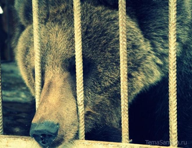 В прокуратуру Самарской области поступила жалоба: в передвижном зоопарке погибают животные