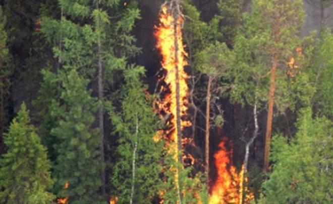 """В Самарской области начнет работать телефон """"горячей линии"""" по лесным пожарам"""